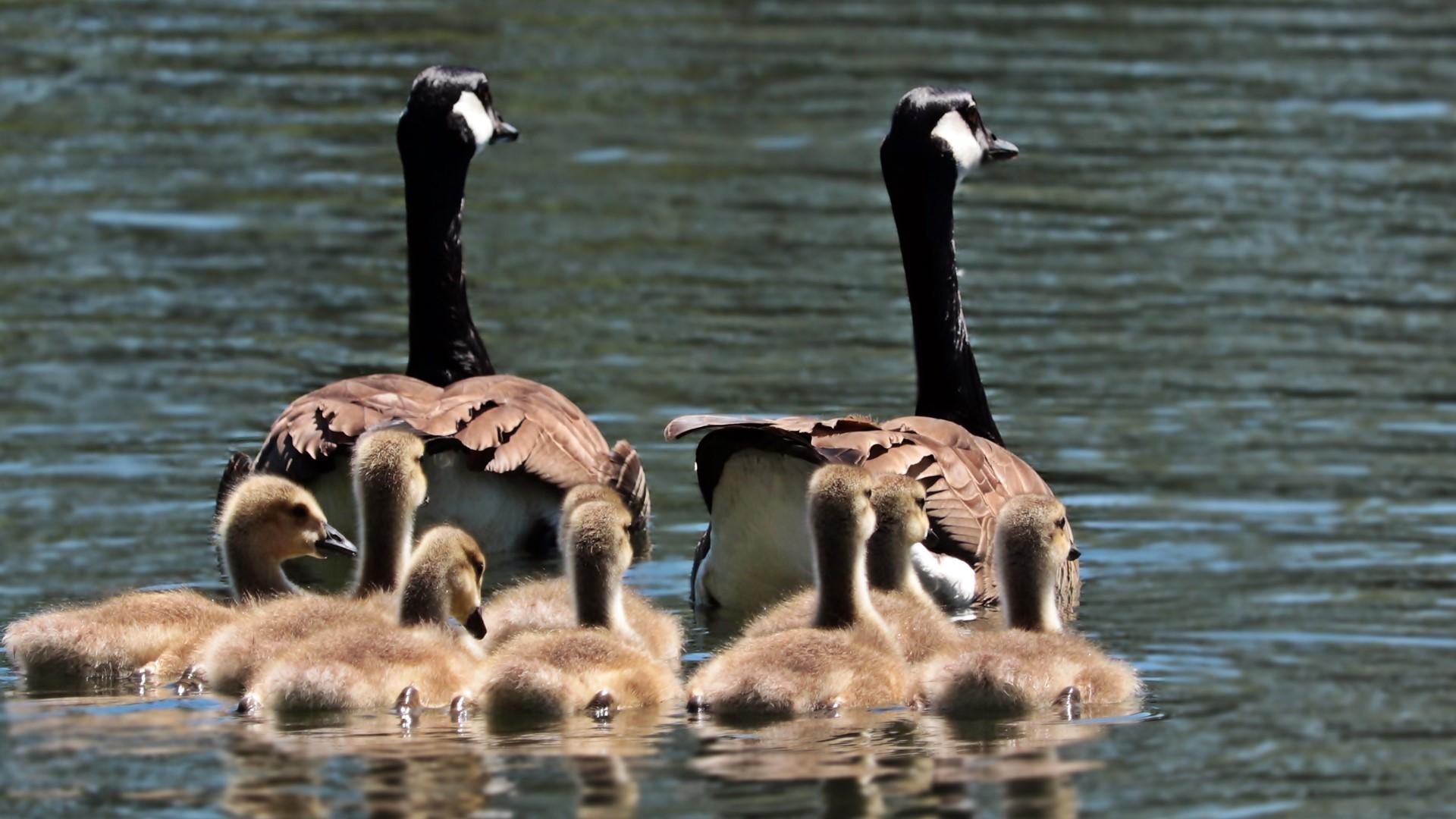 Familie mit vielen Kindern in der Nachfolgeplanung GENAPLAN